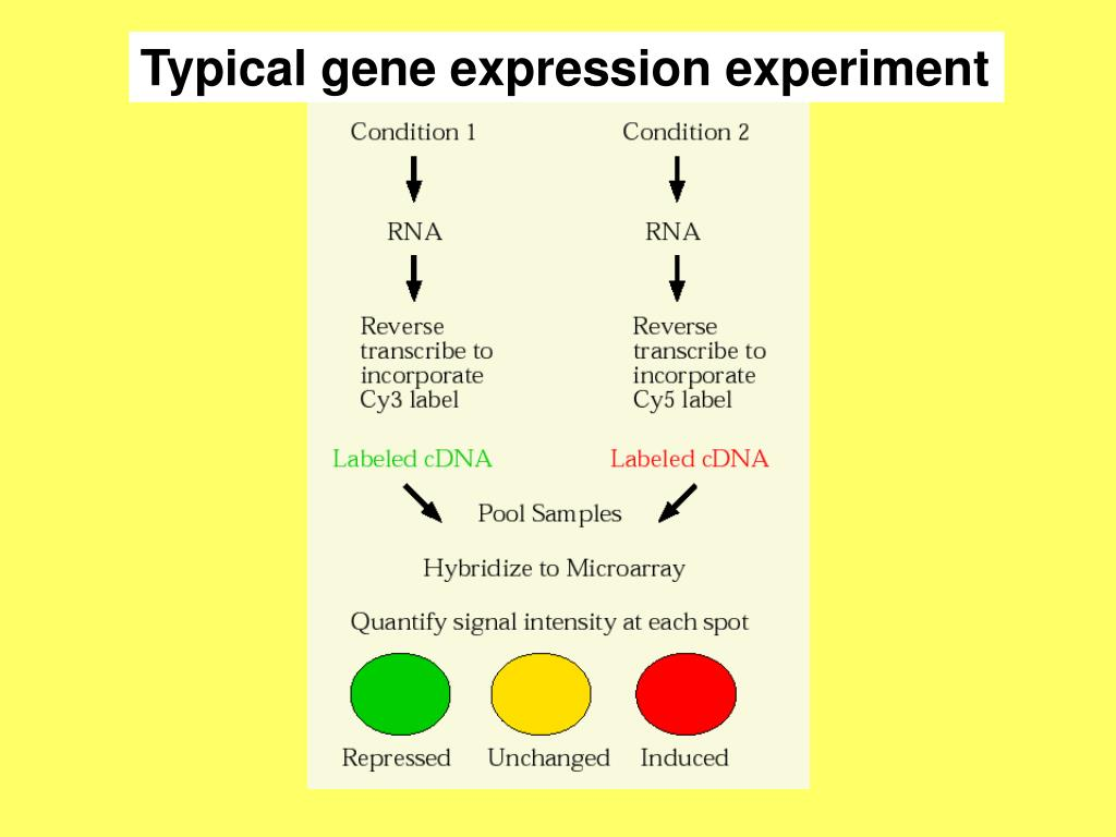 Typical gene expression experiment