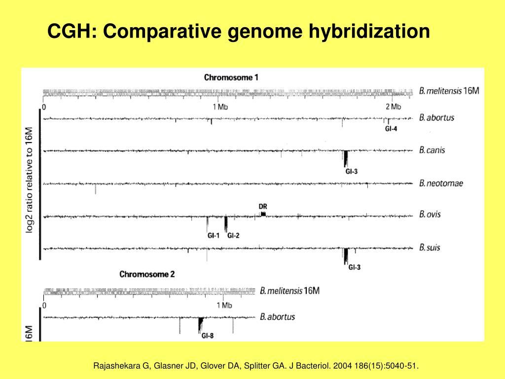 CGH: Comparative genome hybridization