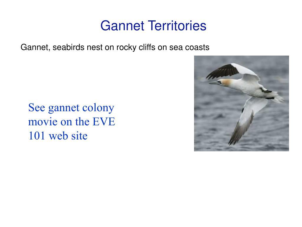 Gannet Territories