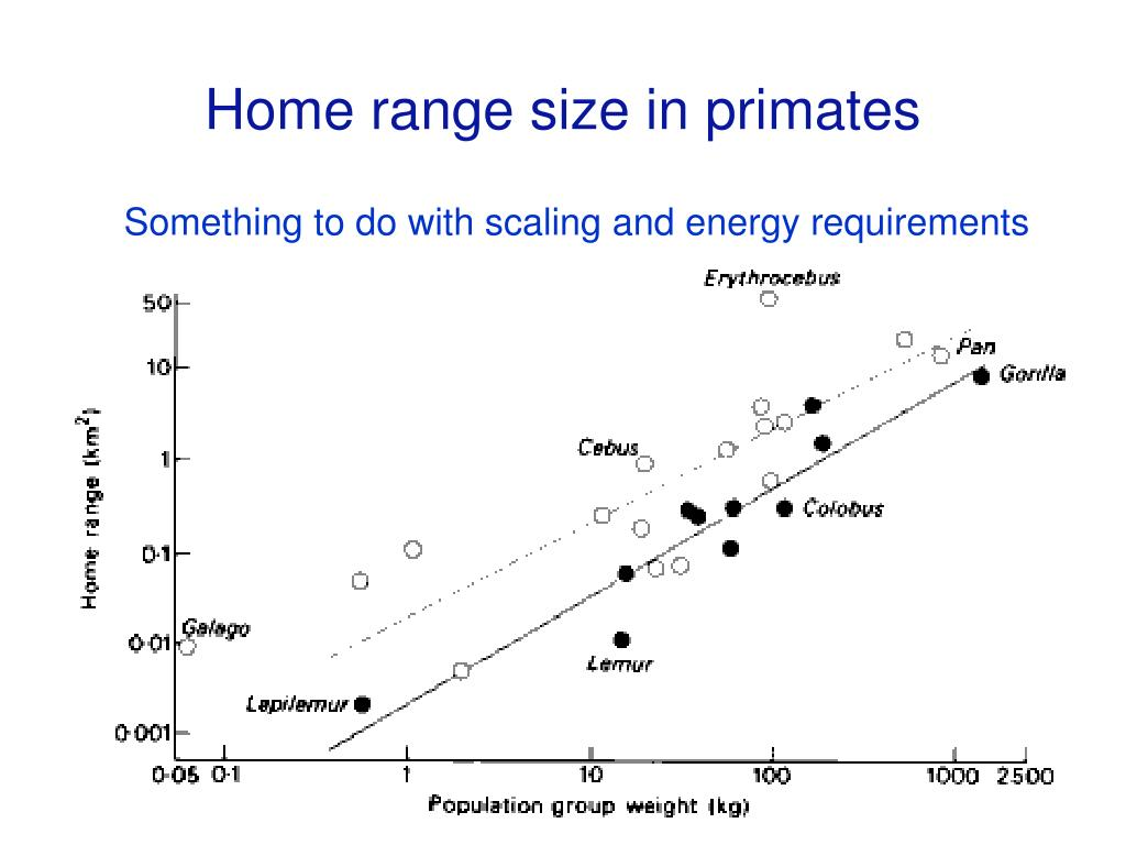 Home range size in primates