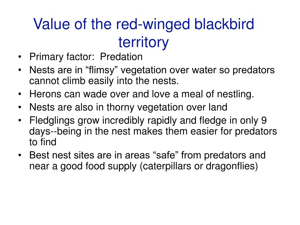 Value of the red-winged blackbird territory