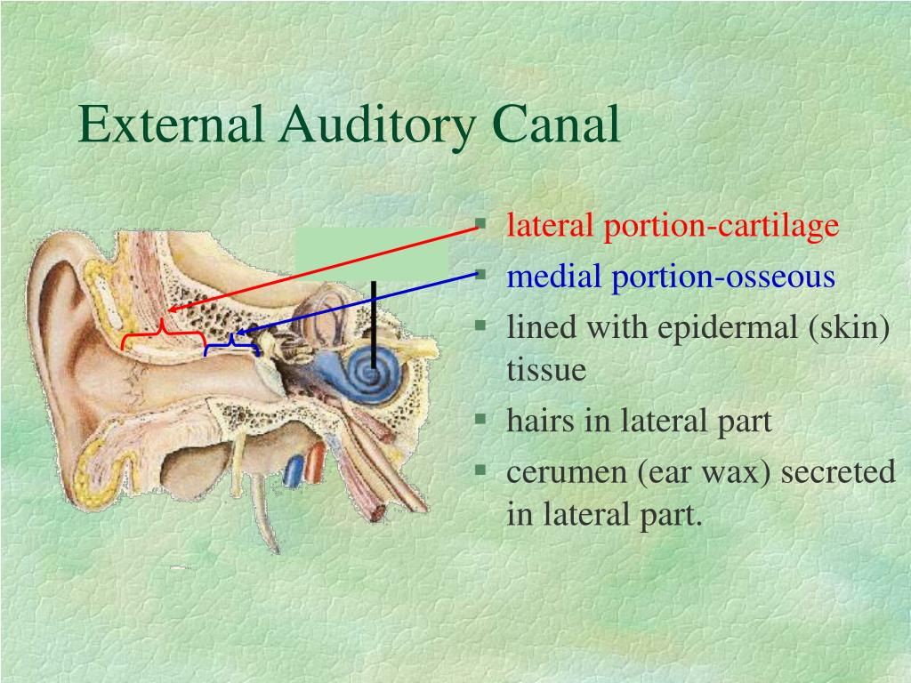 The Human Ear Canal - I | Wayne Staab, PhD ...