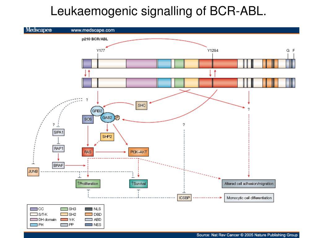 Leukaemogenic signalling of BCR-ABL.