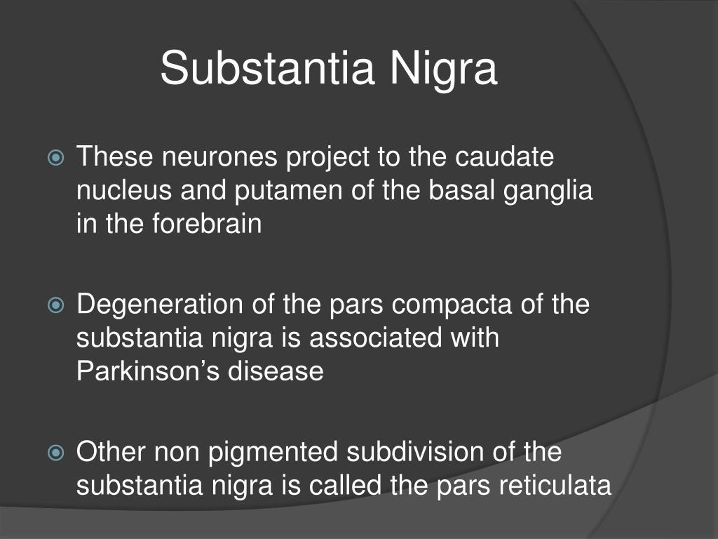 Substantia Nigra