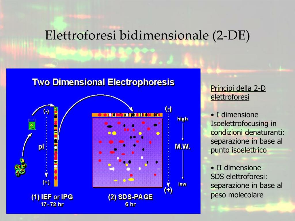 Principi della 2-D elettroforesi