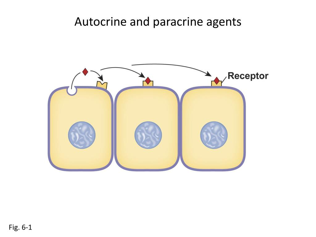 Autocrine and paracrine agents