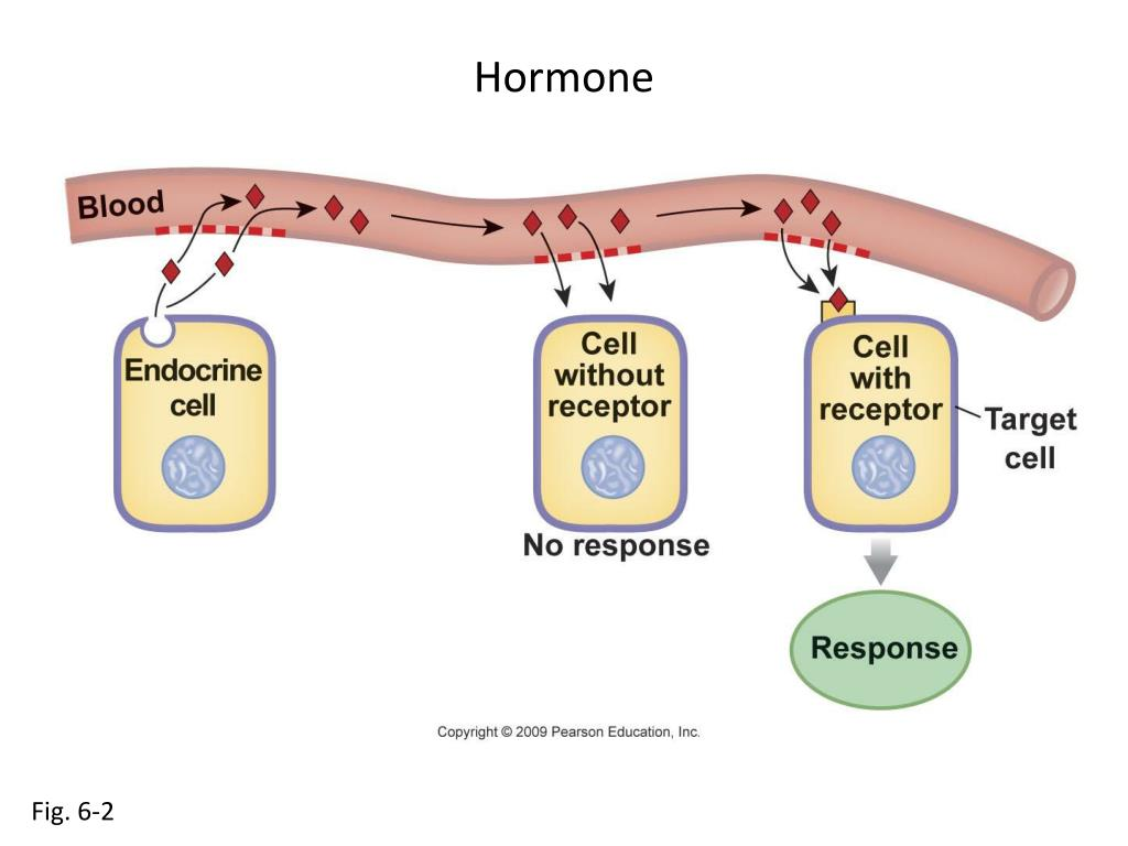 Hormone
