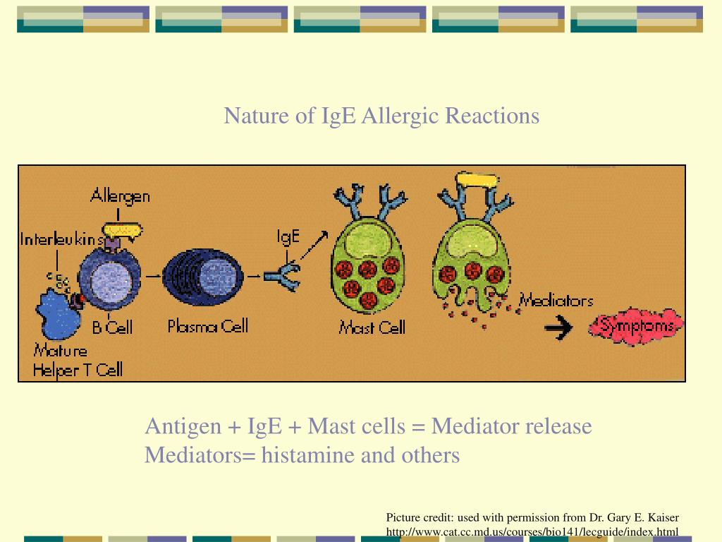 Nature of IgE Allergic Reactions