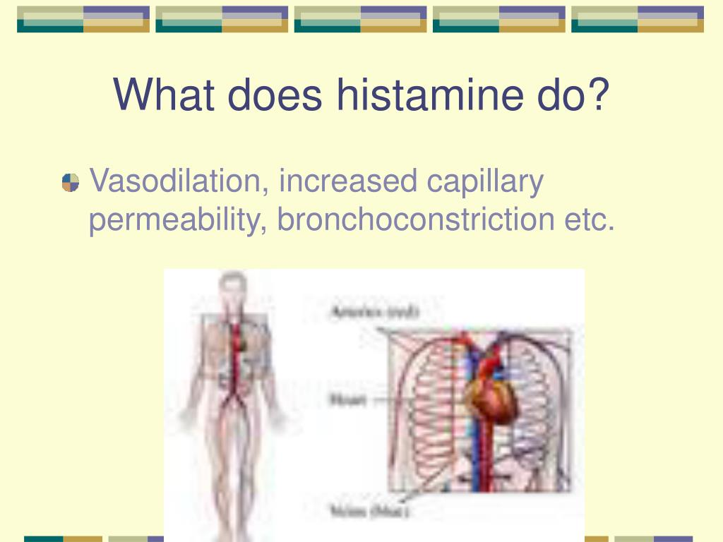 What does histamine do?