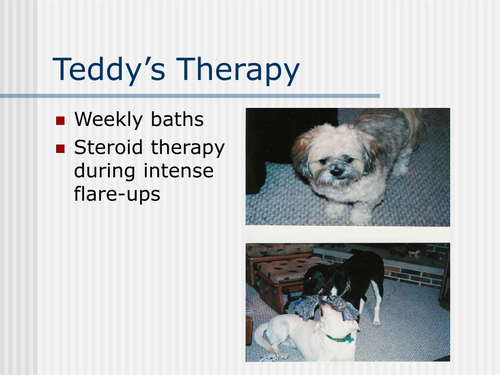 Teddy's Therapy