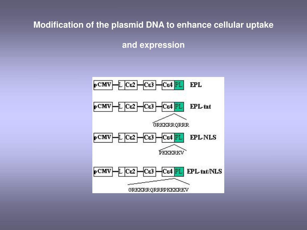 Modification of the plasmid DNA to enhance cellular uptake and expression