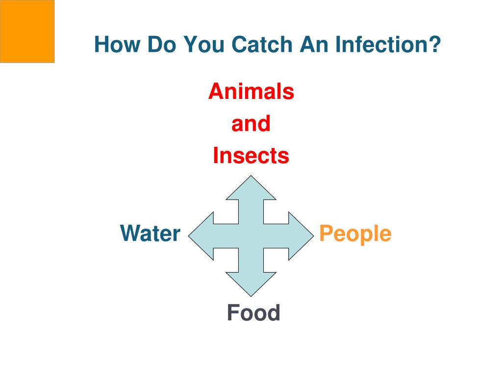 How Do You Catch An Infection?