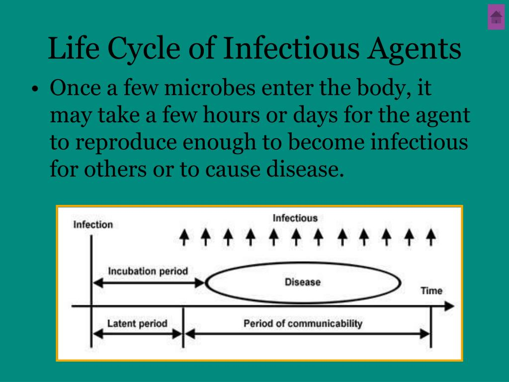 Life Cycle of Infectious Agents