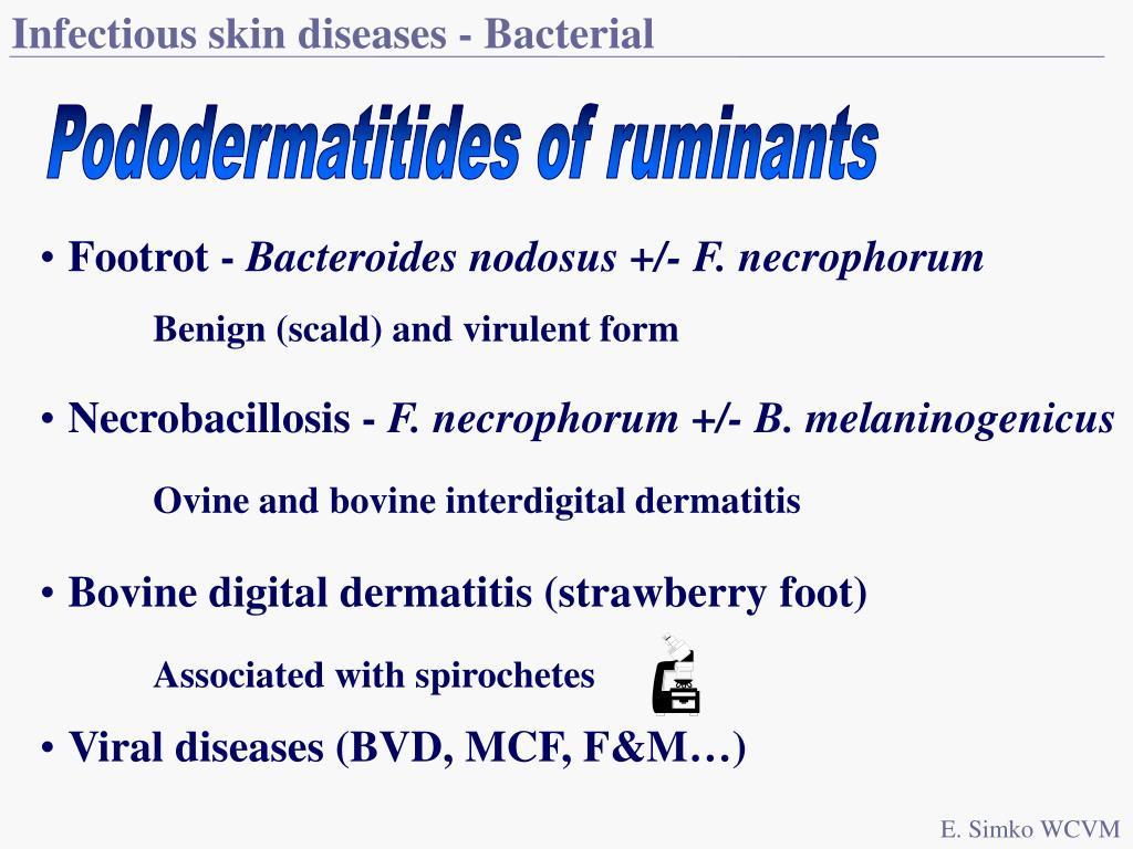 Infectious skin diseases - Bacterial
