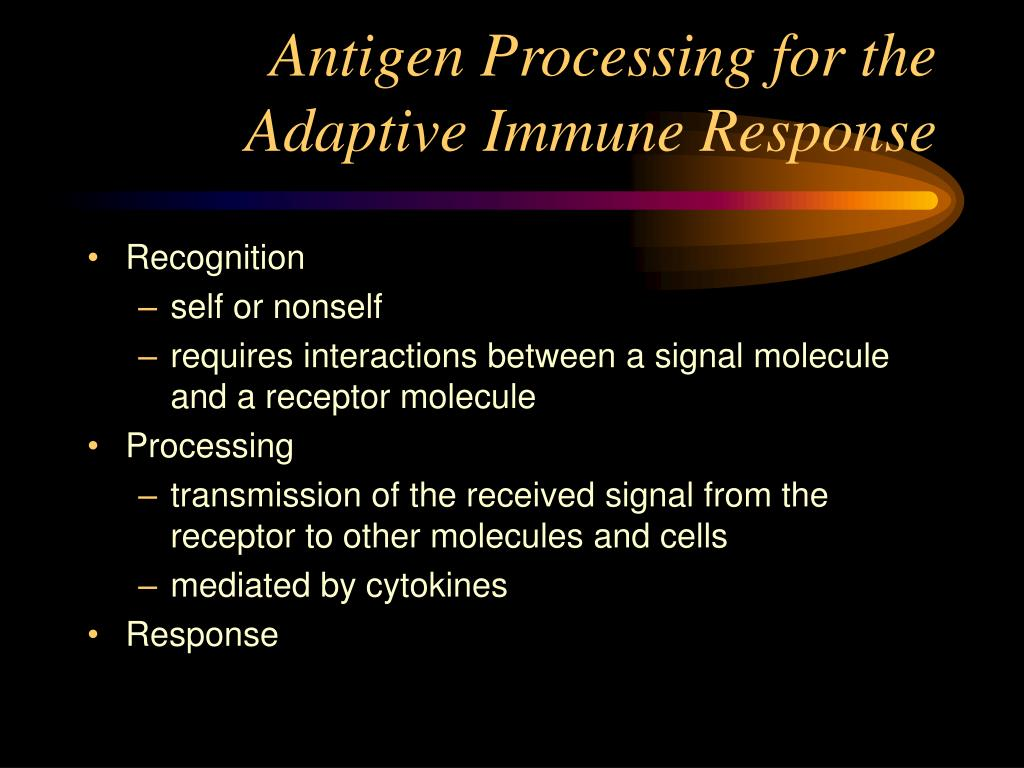 Antigen Processing for the Adaptive Immune Response