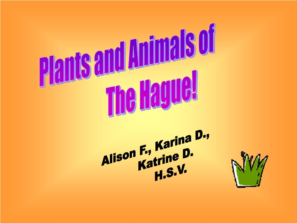 Plants and Animals of