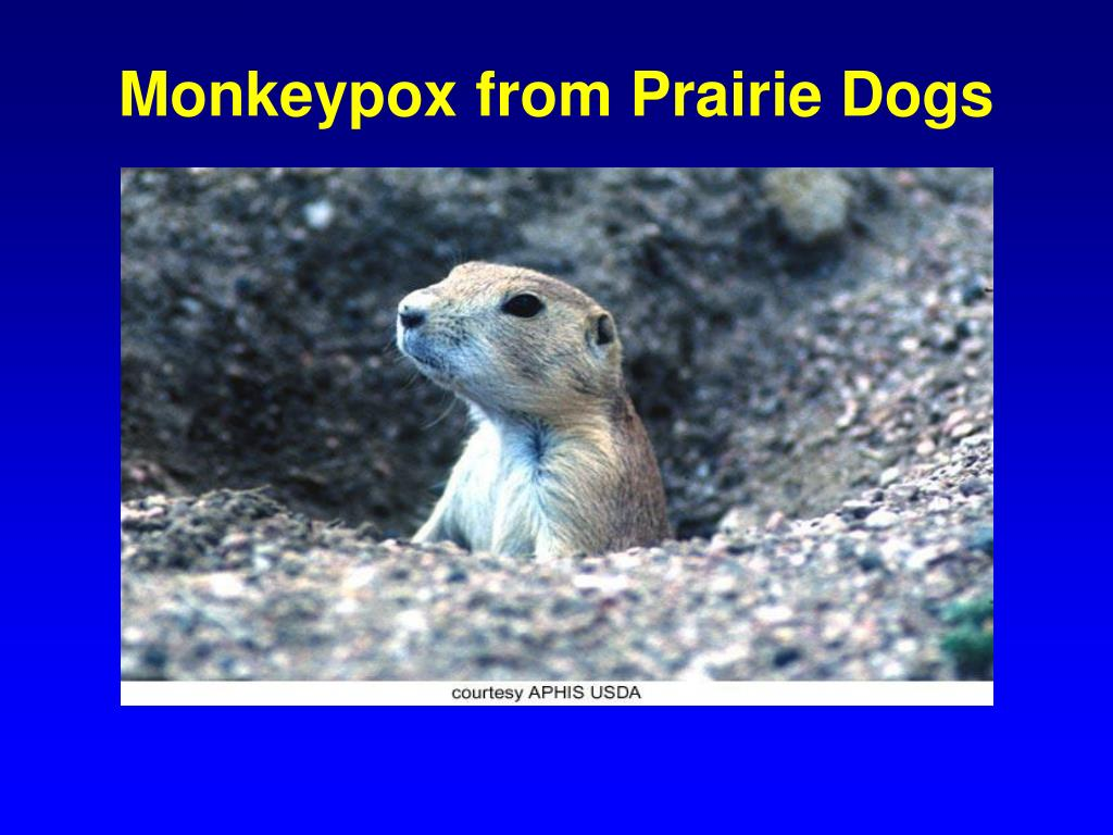 Monkeypox from Prairie Dogs