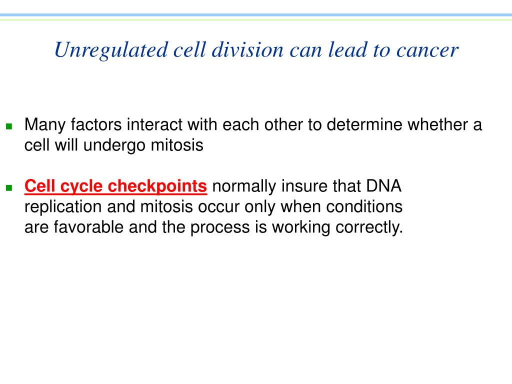 Unregulated cell division can lead to cancer