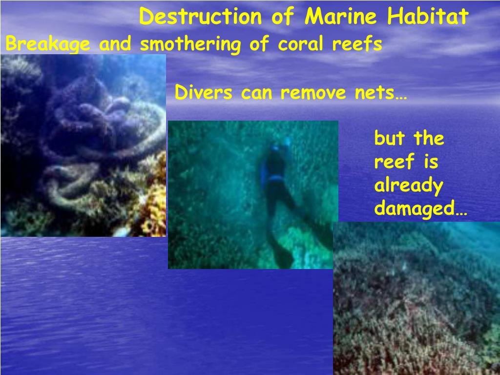 Destruction of Marine Habitat