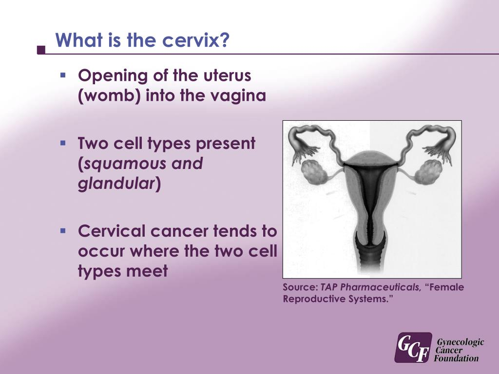 What is the cervix?