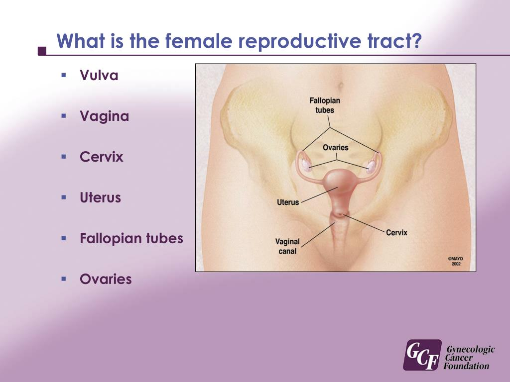 What is the female reproductive tract?