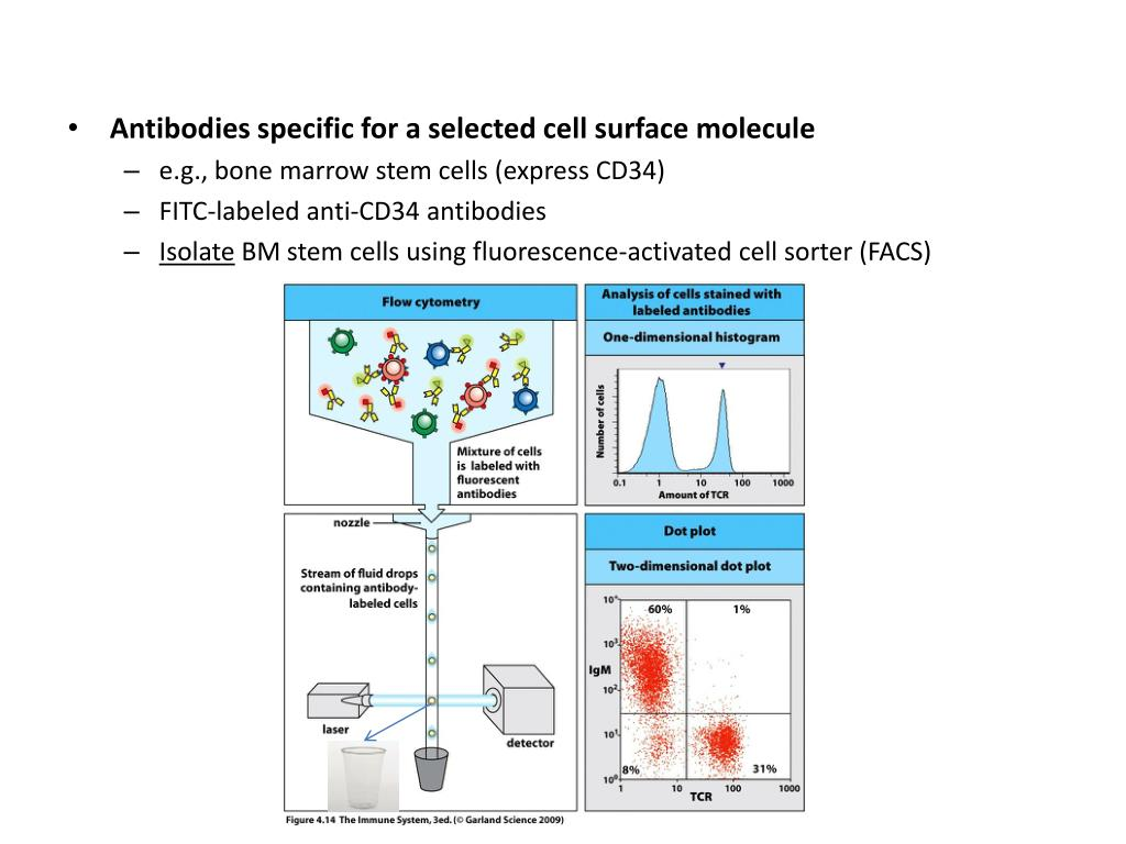 Antibodies specific for a selected cell surface molecule