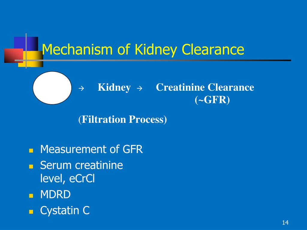 Mechanism of Kidney Clearance