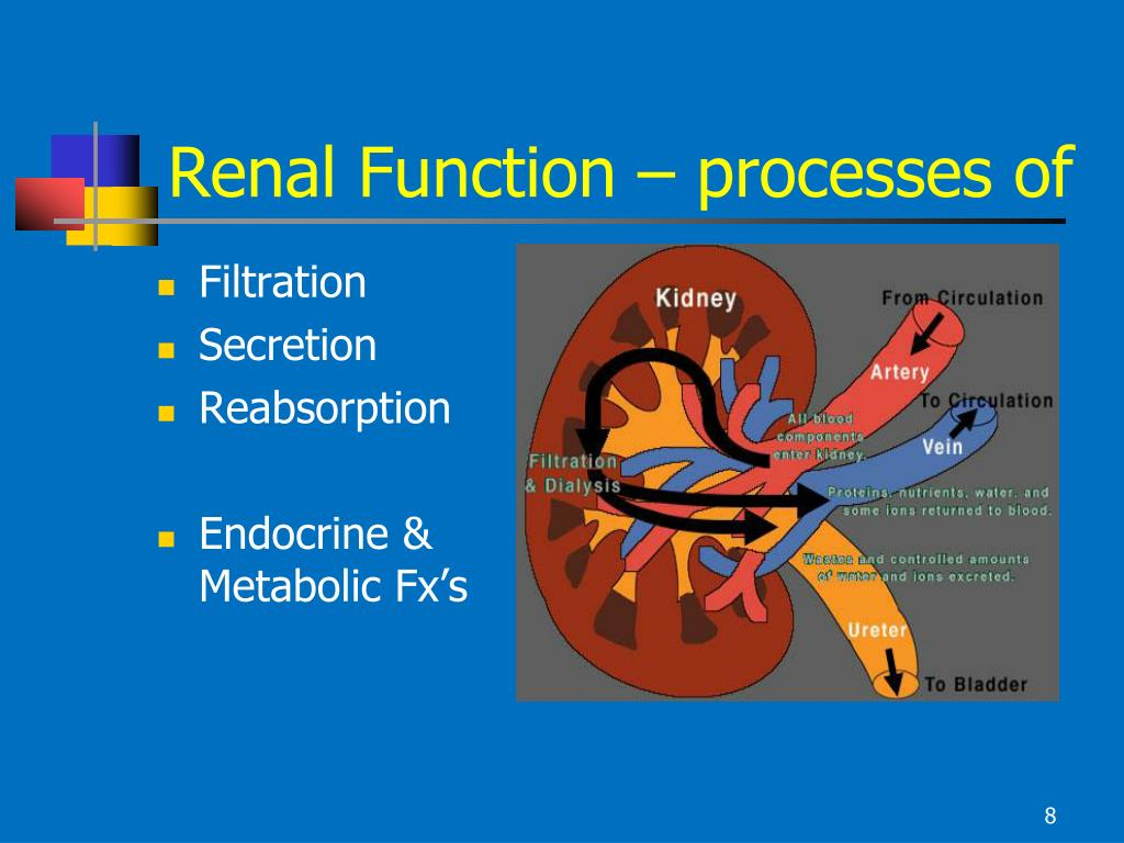 Renal Function – processes of