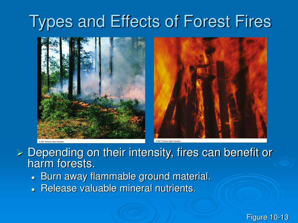 forest fire help or harm essay