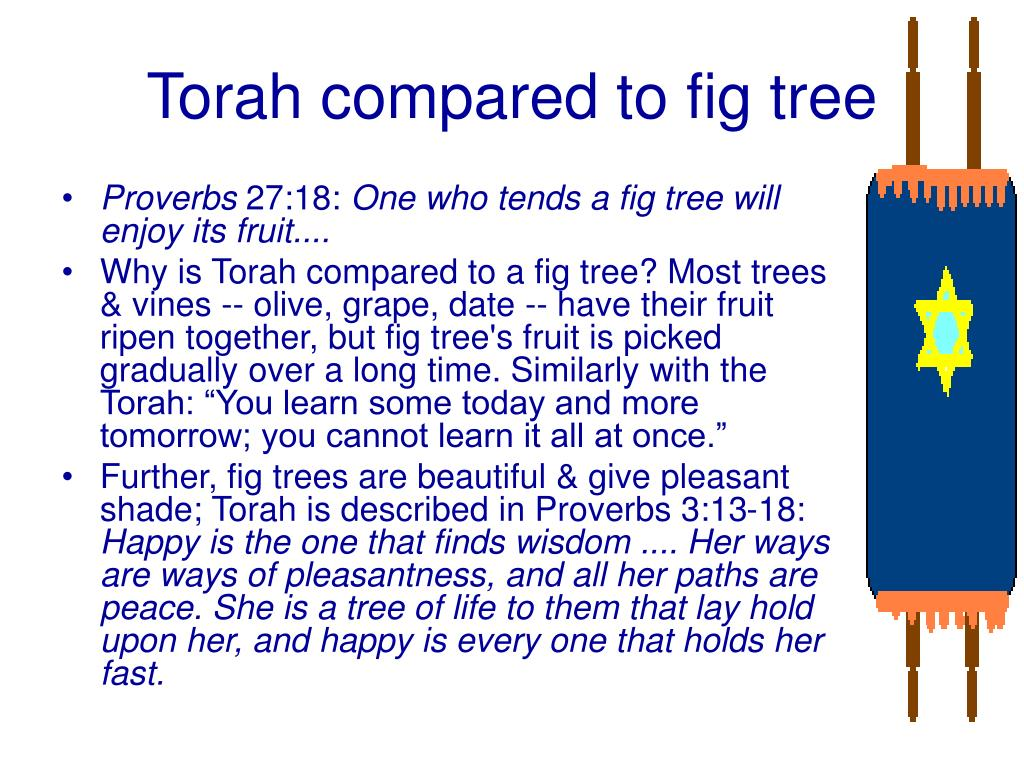 Torah compared to fig tree