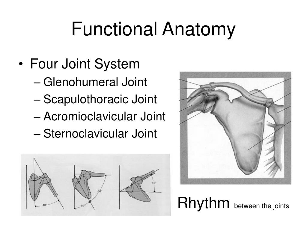 Glenohumeral joint anatomy