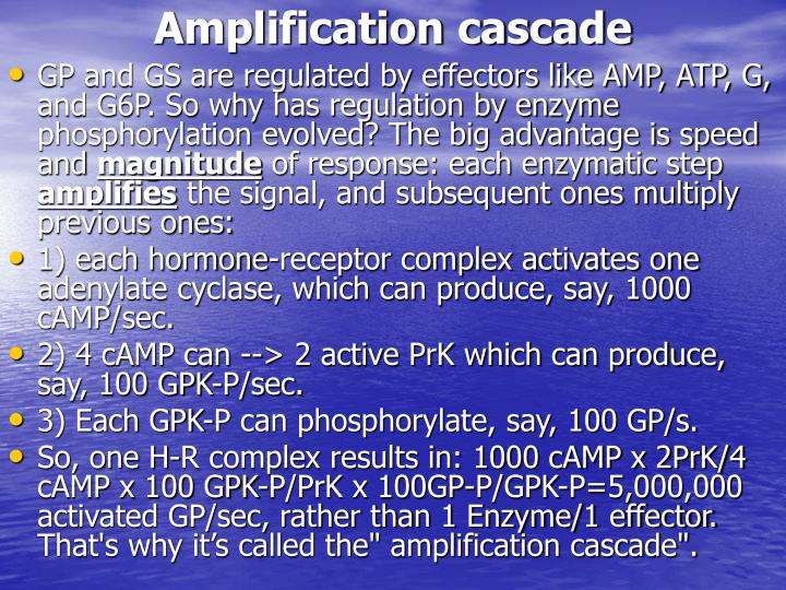 Amplification cascade