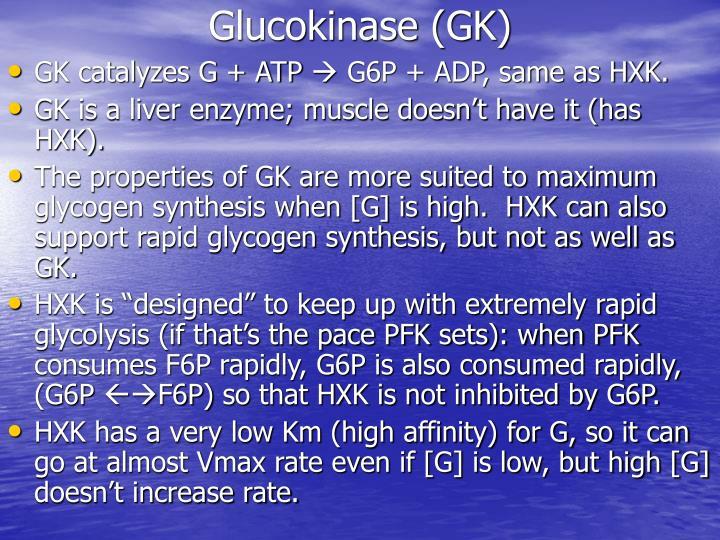 Glucokinase (GK)