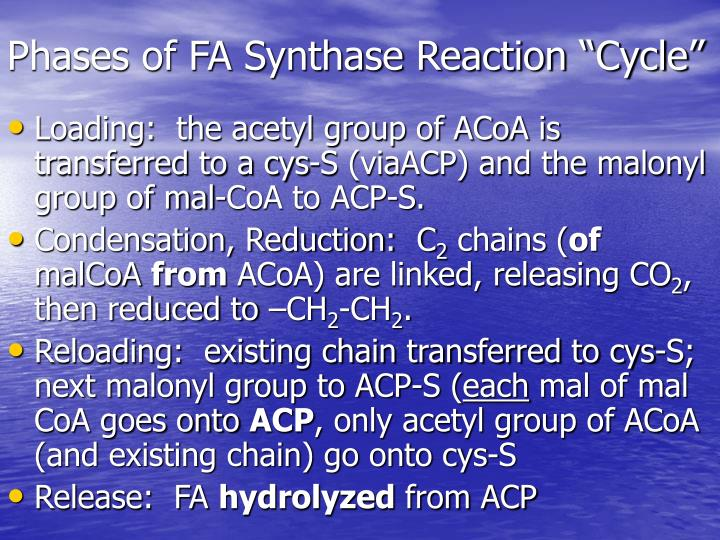 "Phases of FA Synthase Reaction ""Cycle"""