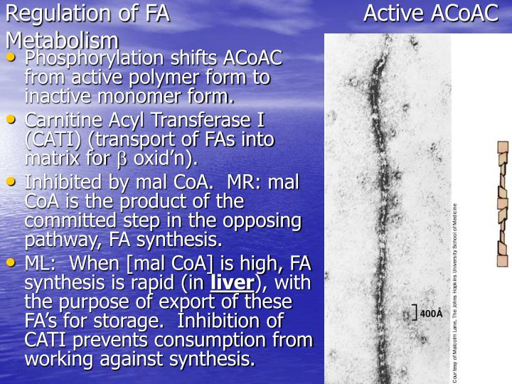Regulation of FAActive ACoAC