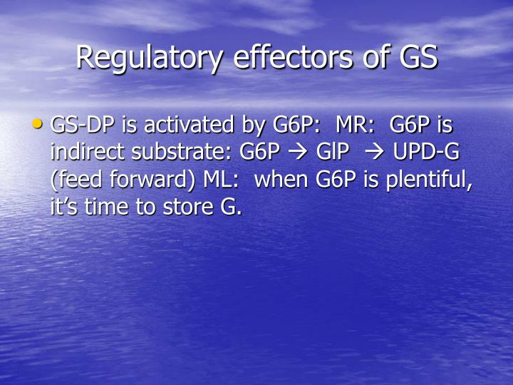 Regulatory effectors of GS