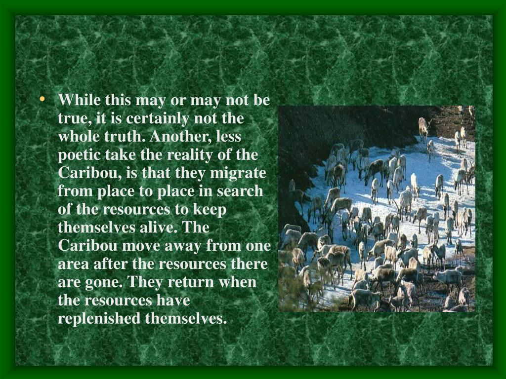 While this may or may not be true, it is certainly not the whole truth. Another, less poetic take the reality of the Caribou, is that they migrate from place to place in search of the resources to keep themselves alive. The Caribou move away from one area after the resources there are gone.