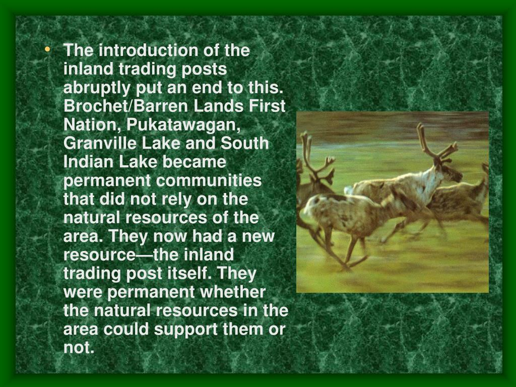 The introduction of the inland trading posts abruptly put an end to this. Brochet/Barren Lands First Nation, Pukatawagan, Granville Lake and South Indian Lake became permanent communities that did not rely on the natural resources of the area. They now had a new resource—the inland trading post itself. They were permanent whether the natural resources in the area could support them or not.