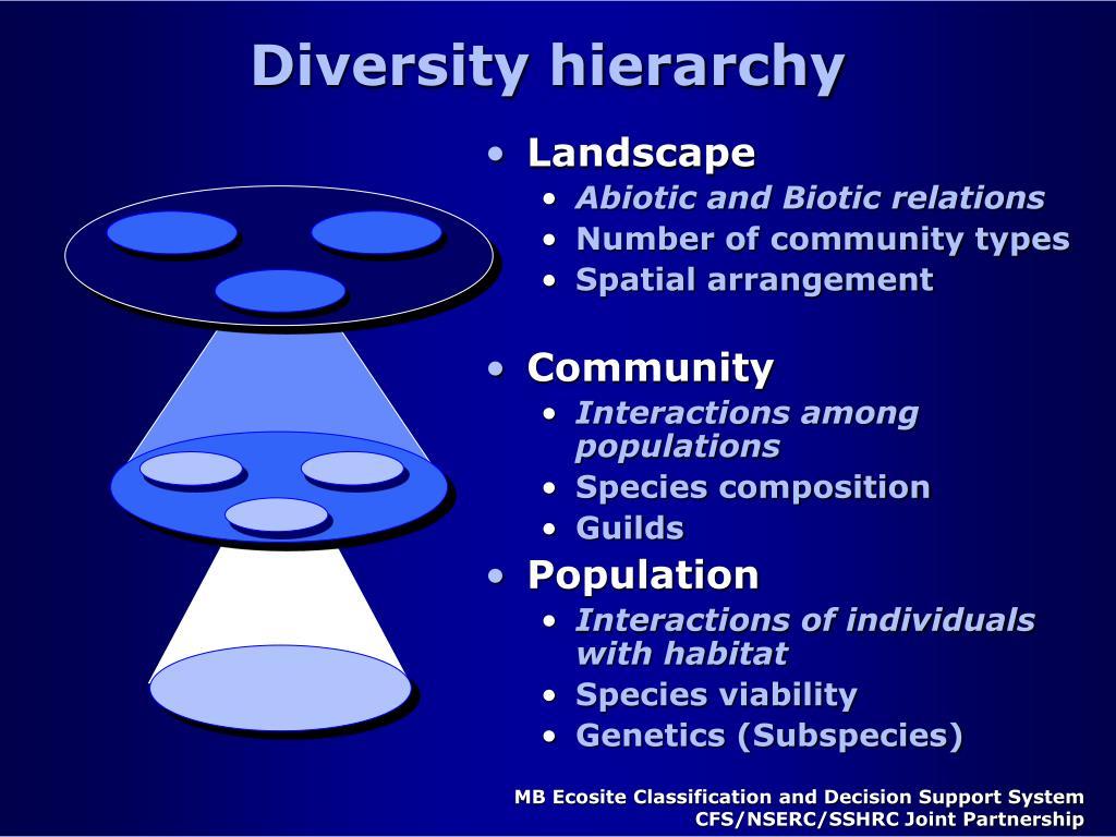 Diversity hierarchy