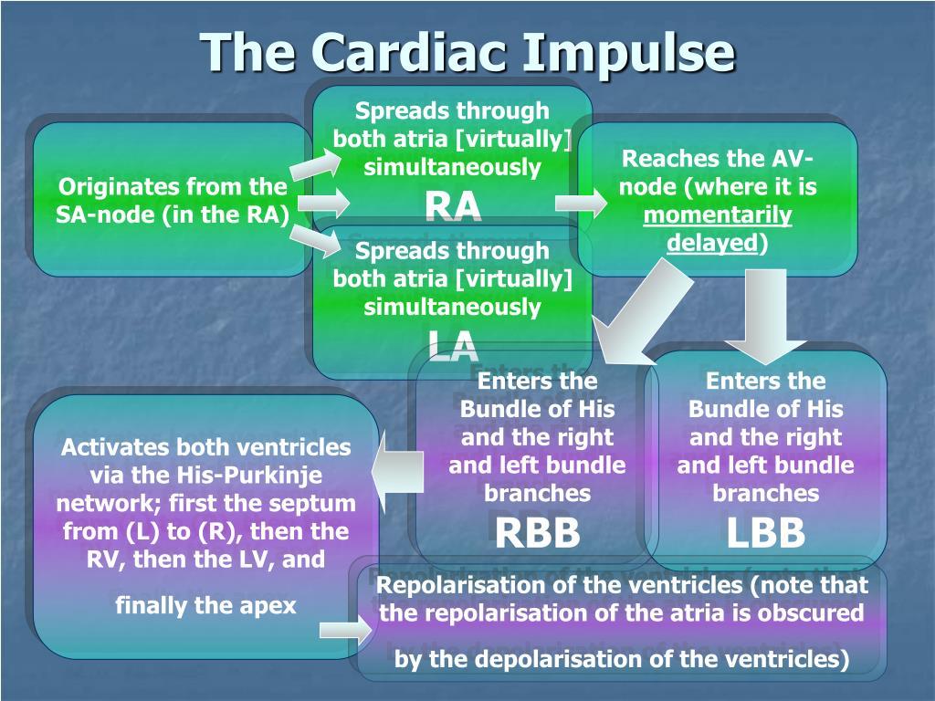The Cardiac Impulse