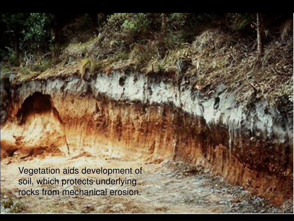 Vegetation aids development of soil, which protects underlying rocks from mechanical erosion.