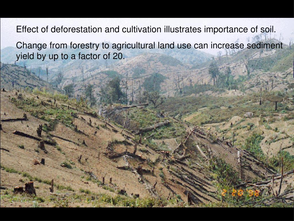 Effect of deforestation and cultivation illustrates importance of soil.