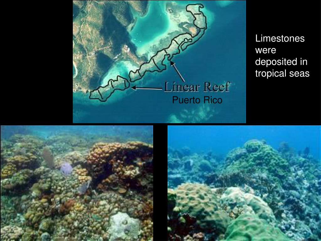 Limestones were deposited in tropical seas
