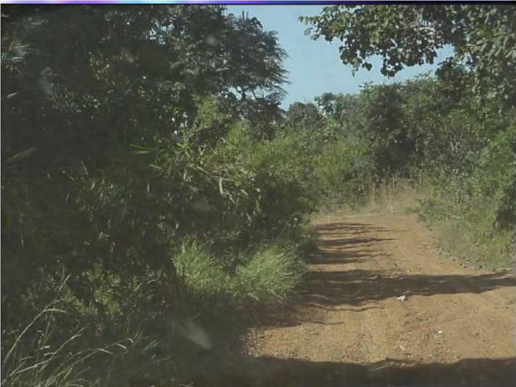 Farm access road through the small scrub brush of the Cerrados.