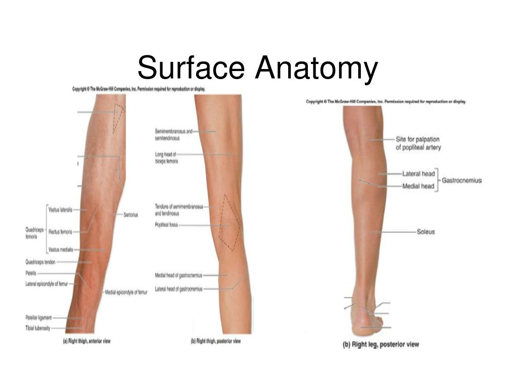 Surface anatomy foot 3209025 - follow4more.info