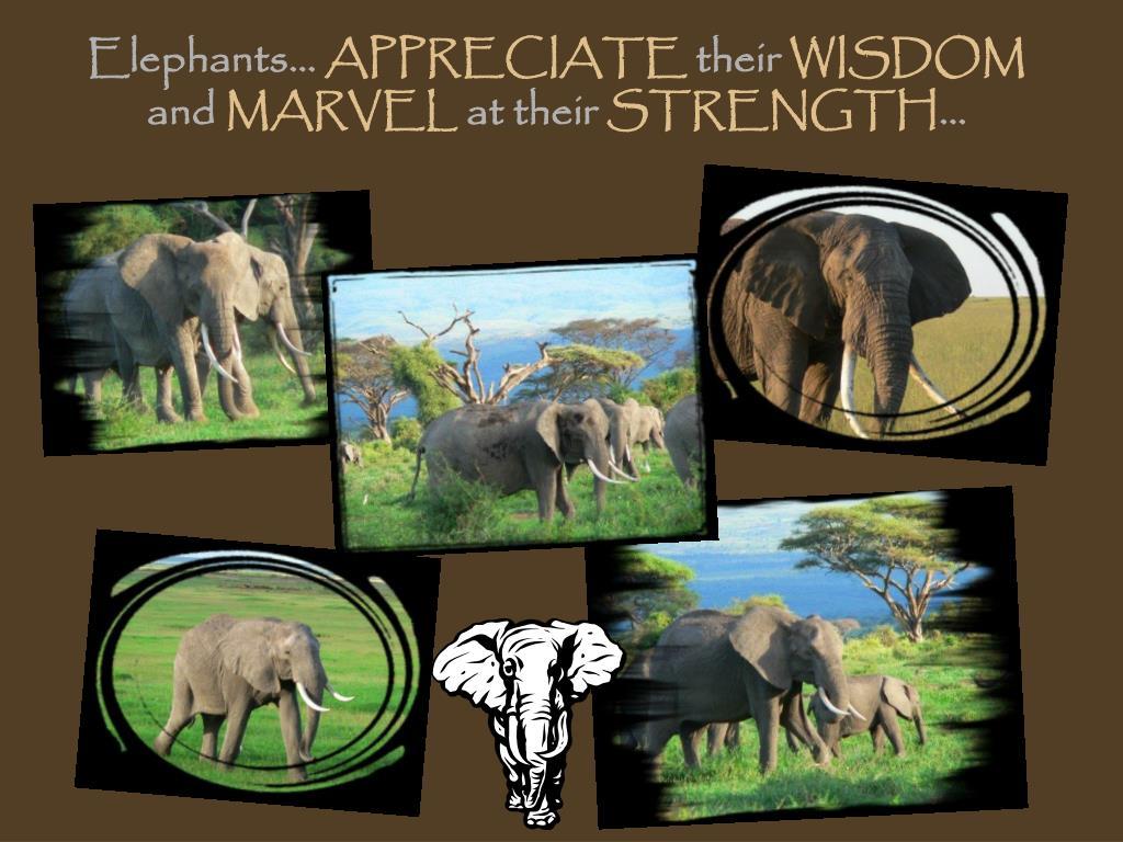 Elephants…