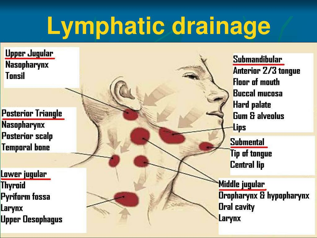 lymphatic drainage of oral cavity pdf