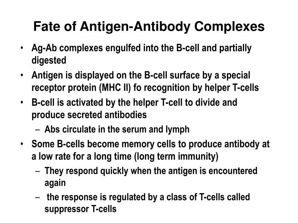 Fate of Antigen-Antibody Complexes