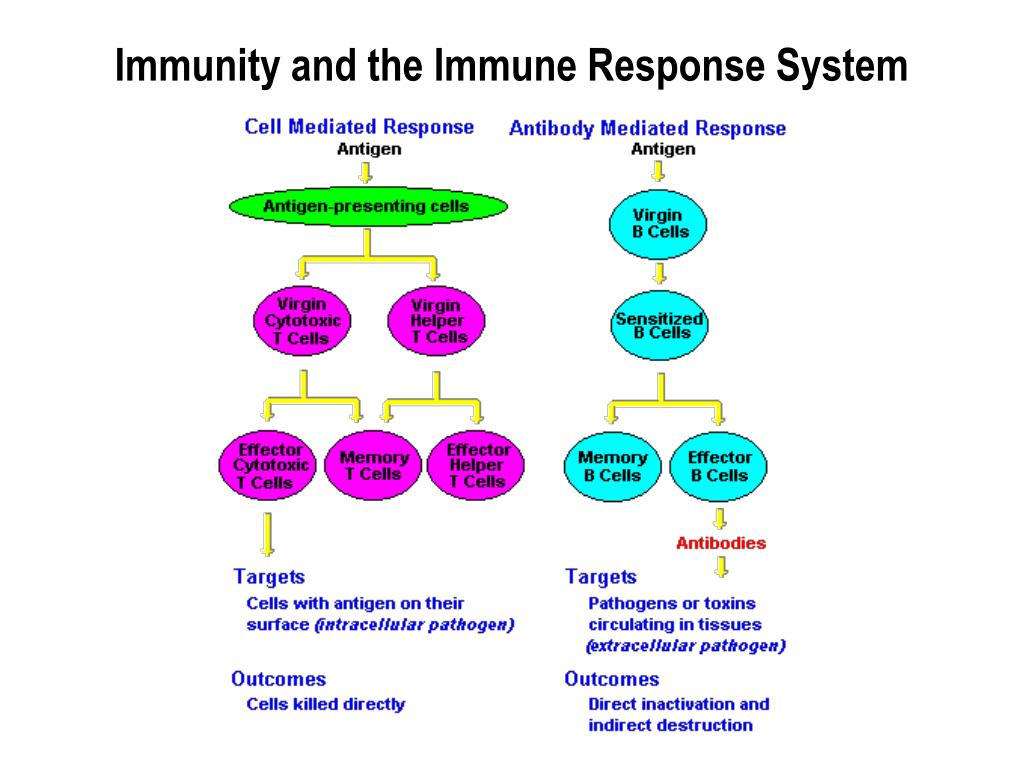 Immunity and the Immune Response System