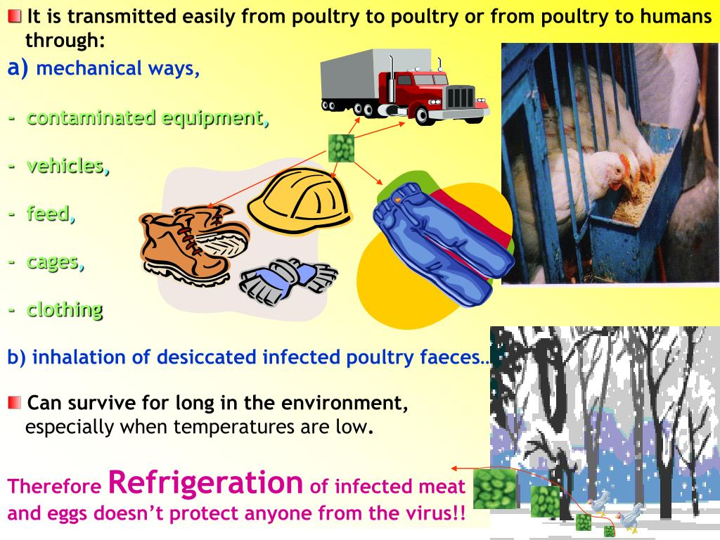 It is transmitted easily from poultry to poultry or from poultry to humans